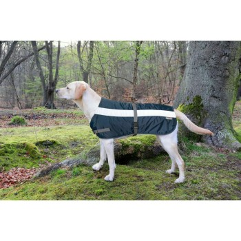 Flecta Hi-vis Dog Jacket Blue
