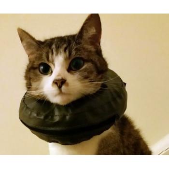 Comfy Collar cat
