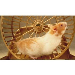 Small Animal Behaviour | Calming Products | SPH Supplies