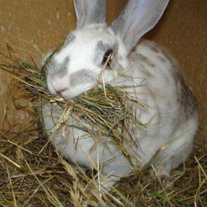 Oxbow Hay for Small Animals | SPH Supplies