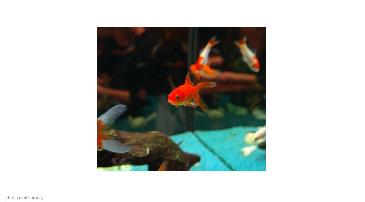 Keeping Your Fish Tank Clean With Aquatic Disinfectants