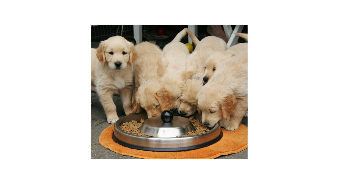 Food Bowl for Dogs Should Be Purchased With Utmost Care