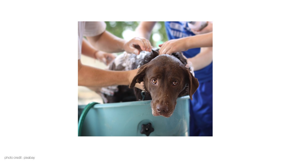 Maintenance Pet Hygiene with Stain and Odour Remover